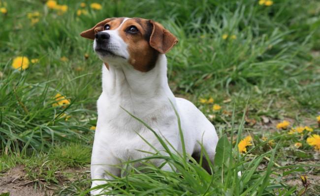 Hunddagismaj15 208